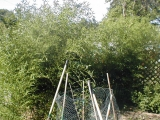 bamboojune16.jpg