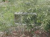 bamboomay1-08.jpg