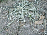 bamboopile.jpg