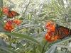 Dmitri's monarchs