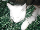 Jas asleep in tree